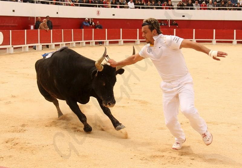 Concours de Manades PALAVAS  08-05-2012 Concou21