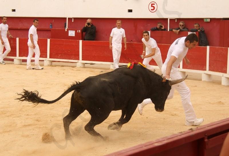 Concours de Manades PALAVAS  08-05-2012 Concou22