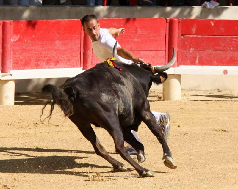 LANSARGUES  Concours de Manades  17-08-2011 Course14