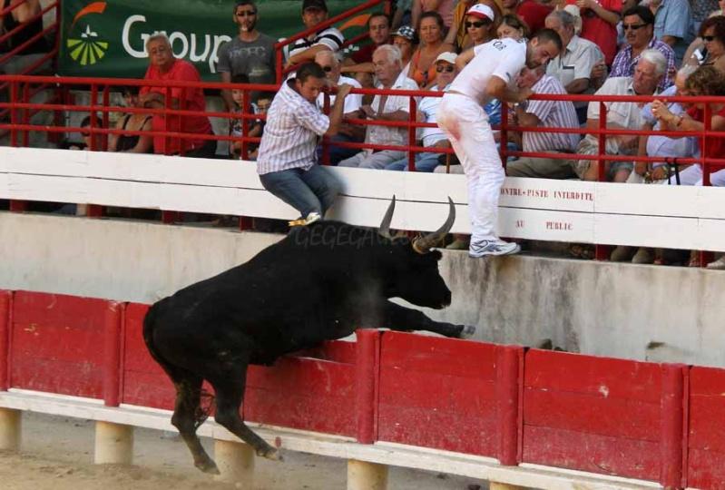 LANSARGUES  Concours de Manades  17-08-2011 Course20