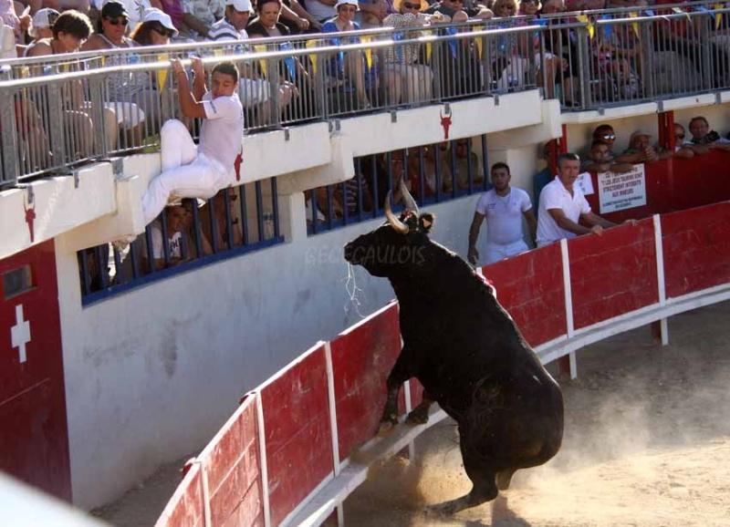 Grau du Roi  Taureaux Jeunes  12-09-2011 Course27