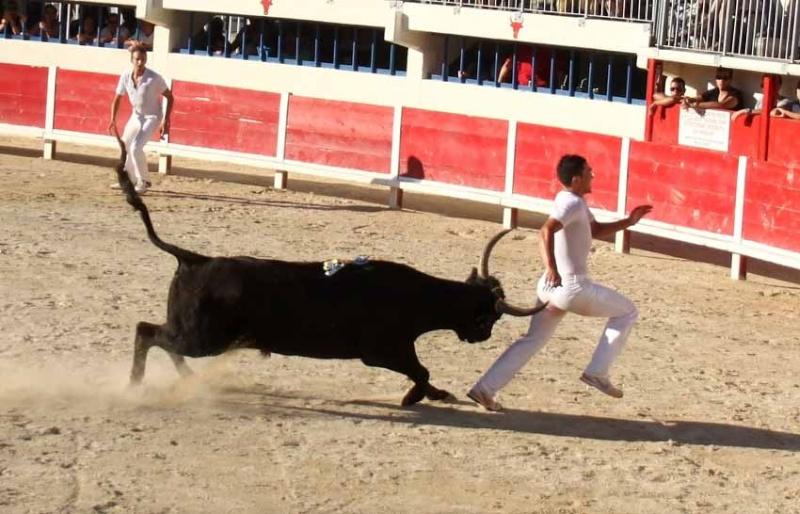 Grau du Roi  Taureaux Jeunes  12-09-2011 Course29