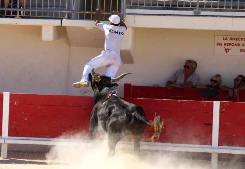 Grau du Roi  Taureaux Jeunes  12-09-2011 Course31