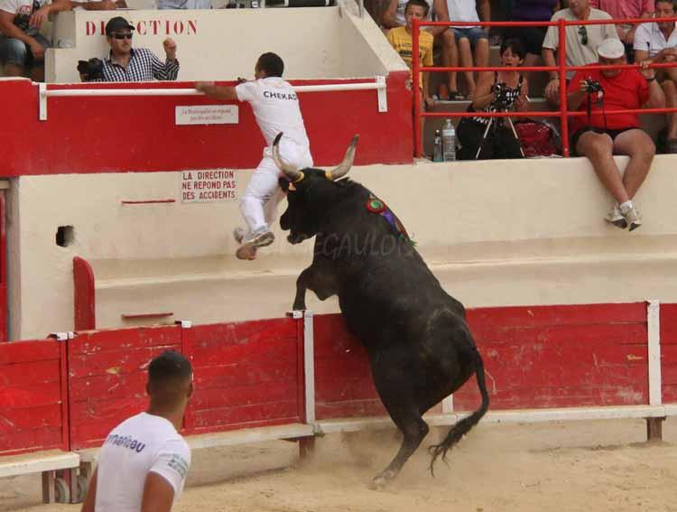 FINALE de Ficelle d'Argent  PEROLS  14-08-2011 Finale19