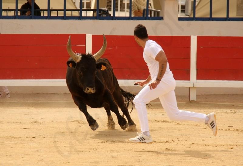 Grau du Roi - Concours de Manades 17-05-2012 Img_0015