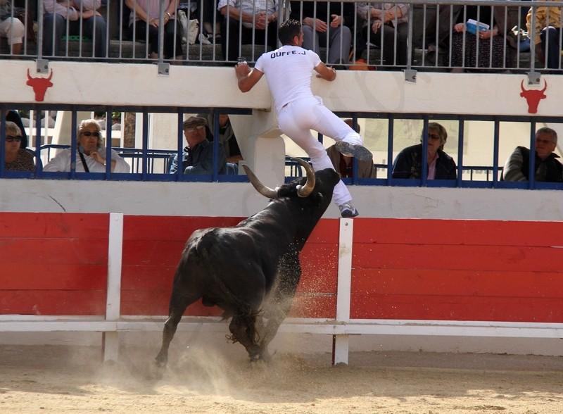 Grau du Roi - Concours de Manades 06-05-2012 Img_0314