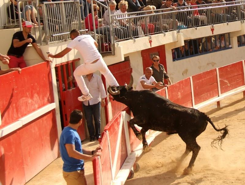 Grau du Roi - Concours de Manades 06-05-2012 Img_0614