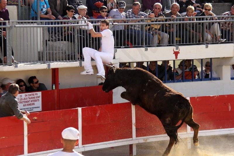 Grau du Roi - Concours de Manades 06-05-2012 Img_0813
