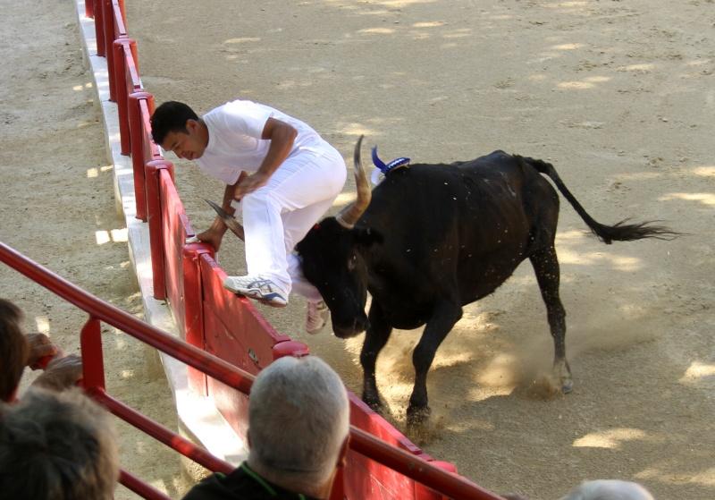 LANSARGUES - AS - Concours de Manades-17-06-2012 Lansar11