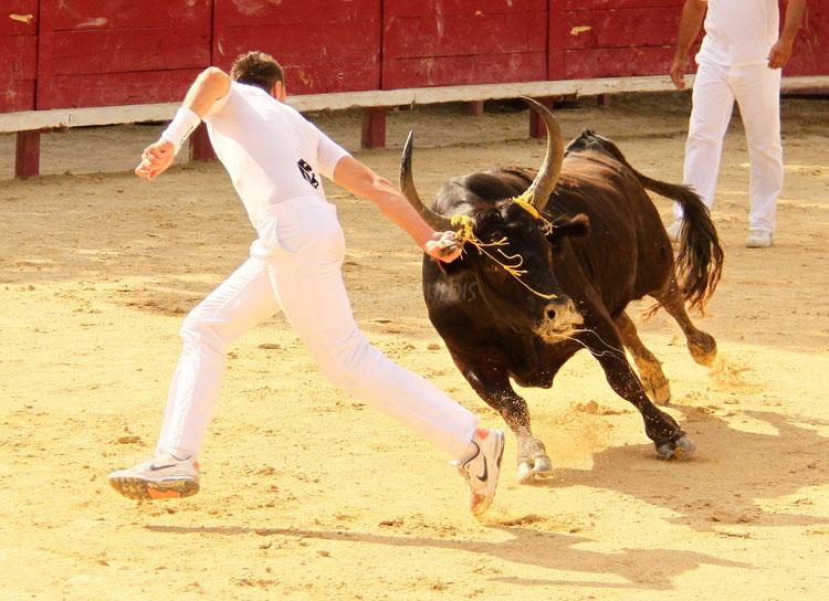 Concours de Manades  VENDARGUES  22-07-2011 Vendar10