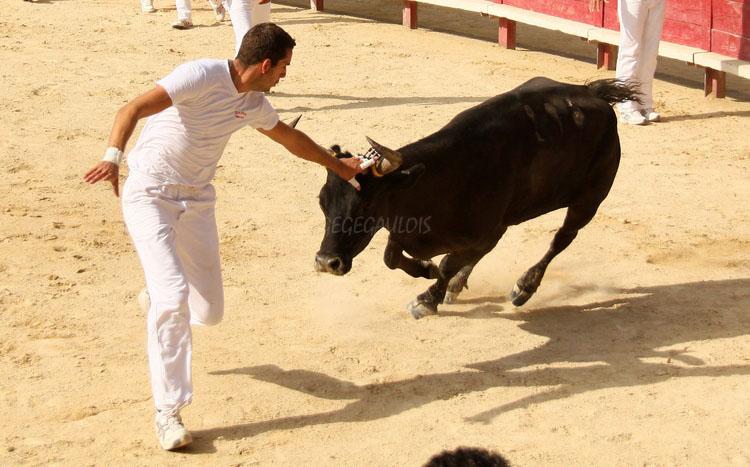 Concours de Manades  VENDARGUES  22-07-2011 Vendar11
