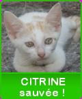 Un petit clic pour nos animaux abandonnés - Page 40 Citrin10