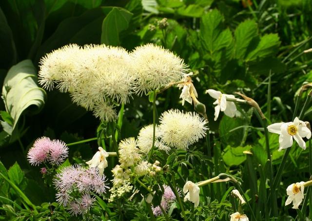 L'un des plus grand et plus beau jardin ... sur les pentes du Lautaret et du Galibier ! Img_4515