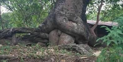 comment se reproduisent les arbres Image015