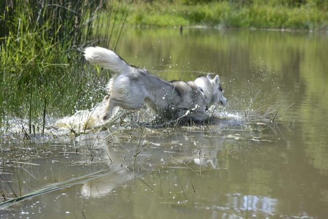à l'étang Etang410