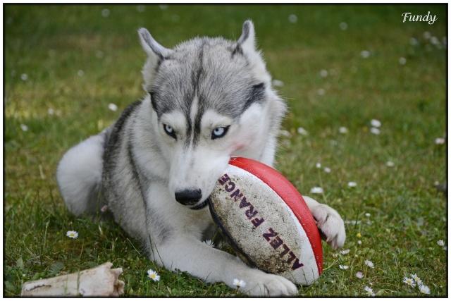 donc, les autres sports ...!!! - Page 2 Fundy521