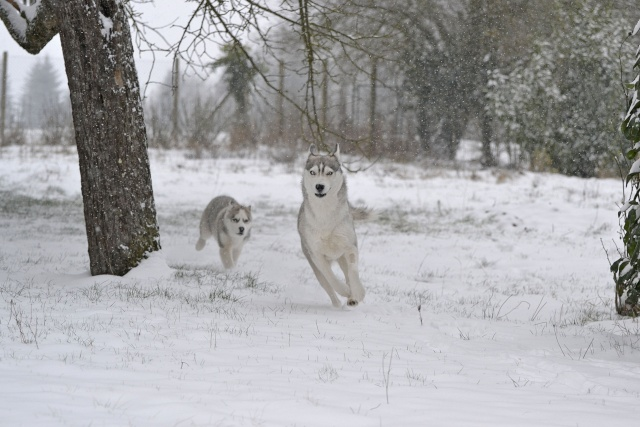 Gallina et Cie dans la neige Neige110