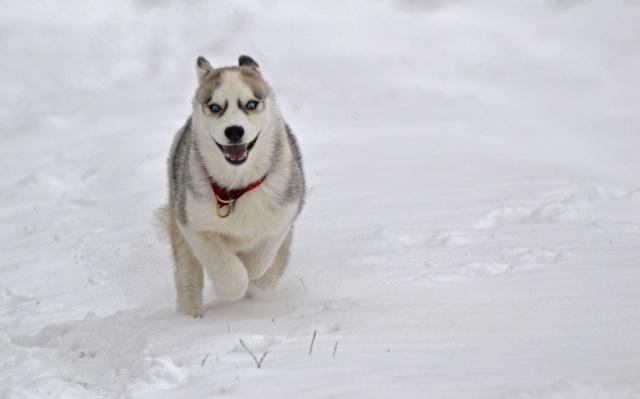 Gallina et Cie dans la neige Neige111