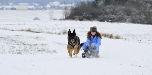 Gallina et Cie dans la neige Neige312