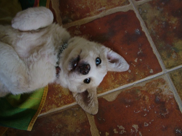 Abandoned Puppy - NOW RE-HOMED! - Page 2 00210