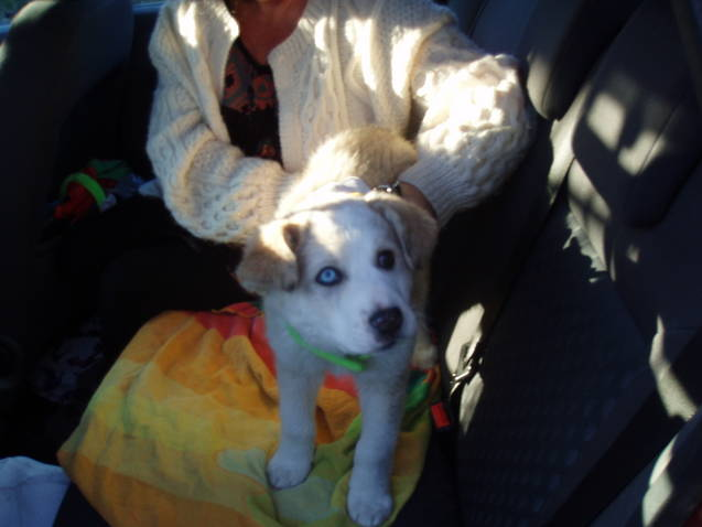 Abandoned Puppy - NOW RE-HOMED! - Page 2 Puppy_11