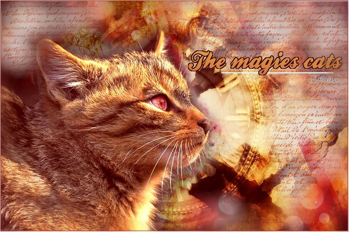 The Magies Cats