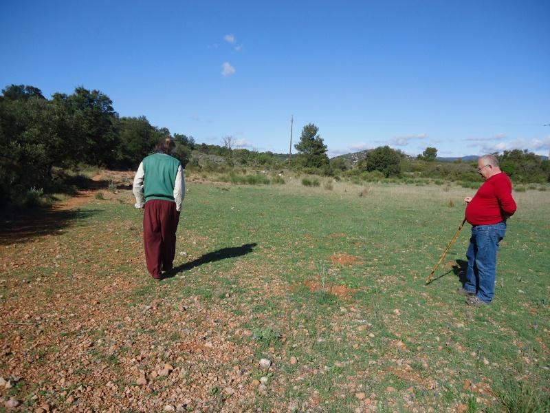 Prairies ou pelouses en début de printemps 00536