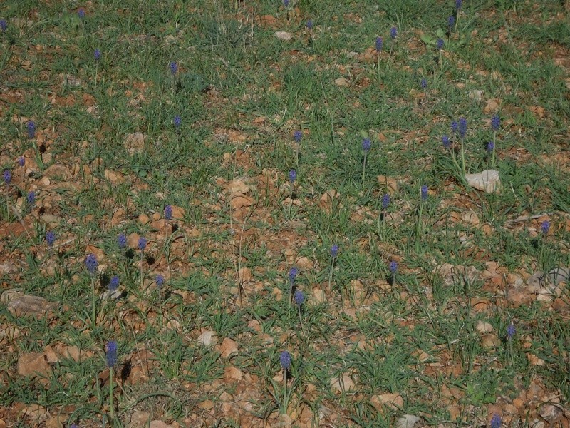 Prairies ou pelouses en début de printemps 00634