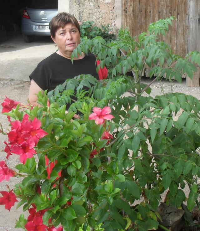 Dahlia imperialis ou Dahlia en arbre - Page 4 01015