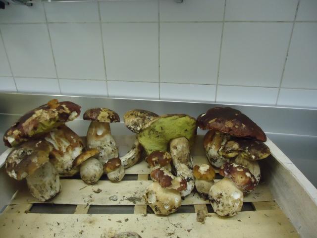 Premiers champignons ! 01027