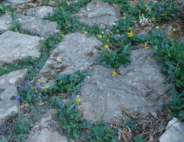 Les violettes - Page 13 01227