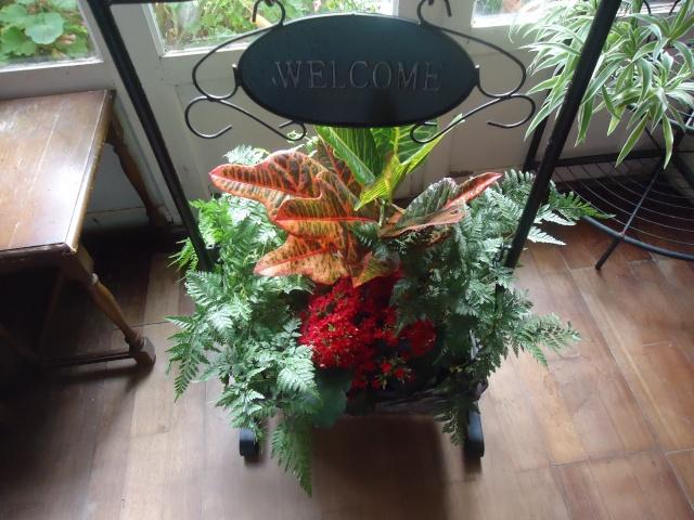 plante offerte  01646