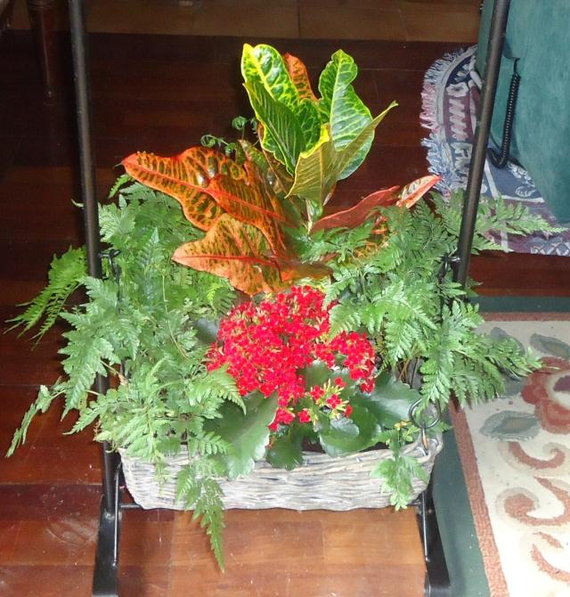 plante offerte  01741