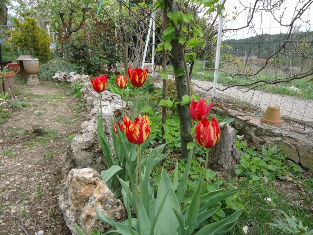 Tulipe 2012  - Page 6 02616