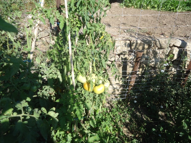 mes legumes - Page 4 05616