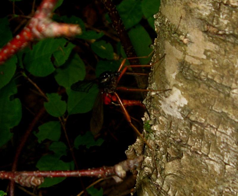 Herping serpents, salamandre, insecte et arachnide de chez nous. 03312