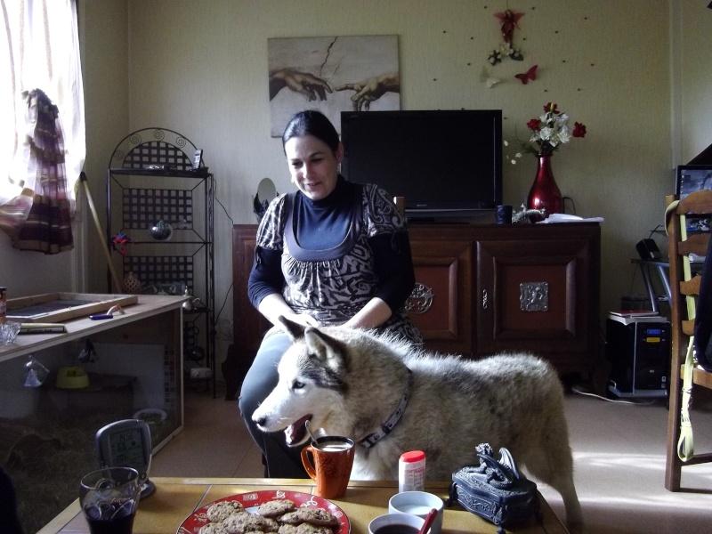 Montche superbe Husky siberien, calme, 15 ans REF (76)DECEDE - Page 2 Imgp2312