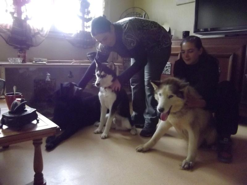 Montche superbe Husky siberien, calme, 15 ans REF (76)DECEDE - Page 2 Imgp2313