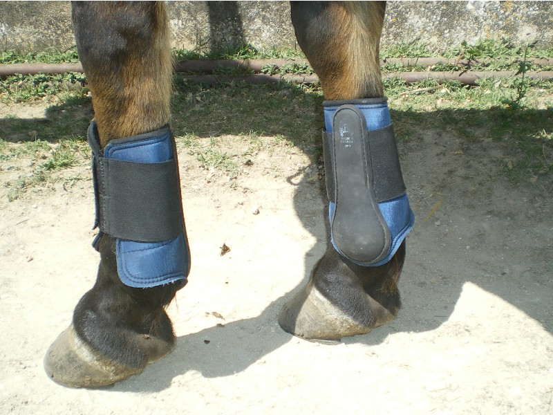 protections, bandes, cloches, taille cheval et poney Hghgjh10
