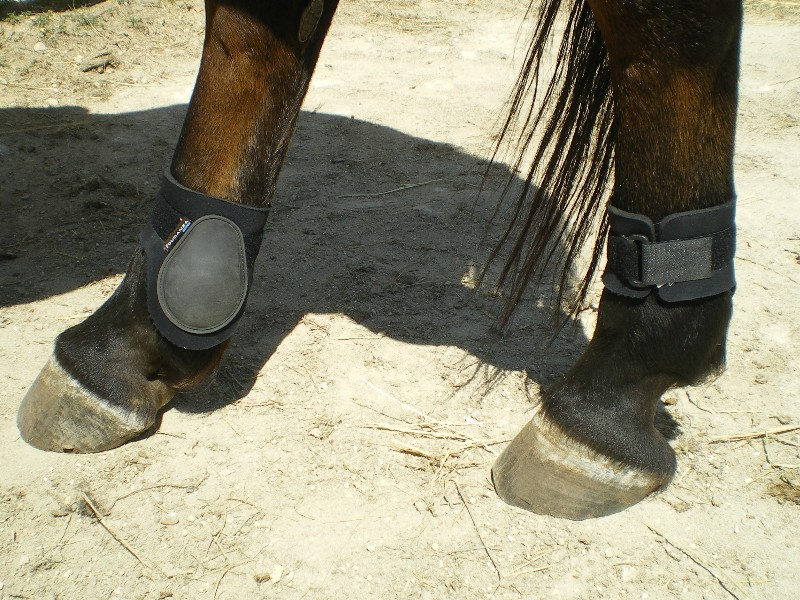 protections, bandes, cloches, taille cheval et poney Hgjhgh10