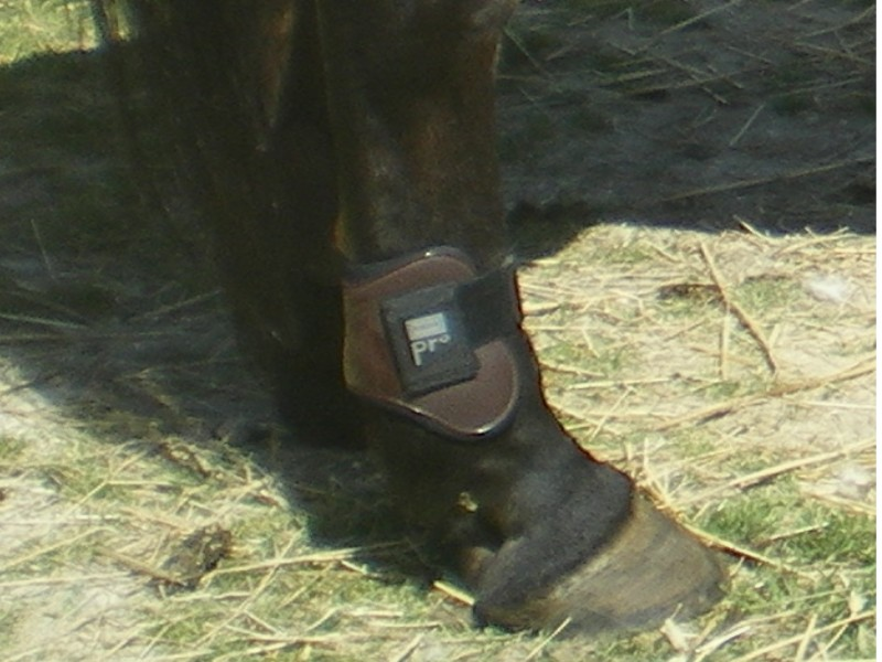 protections, bandes, cloches, taille cheval et poney Hjgjhg10