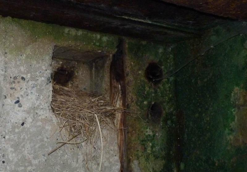 Le tour des bunkers du Cap Sizun P1000714