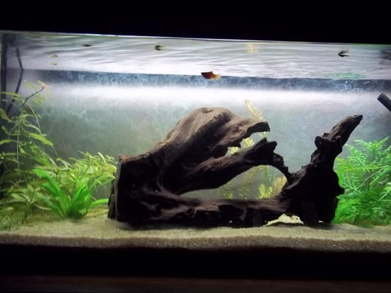 Mon premier Aqua ! un 160 litres !  - Page 3 100_0910