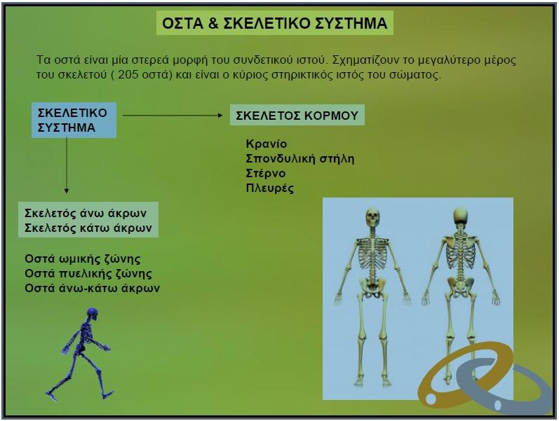 Οστά & Σκελετικό Σύστημα Iii10