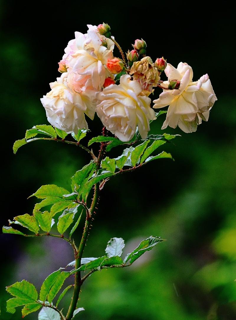 Juste avant la pluie. Fleurs10