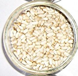 graine de tournesol  Cardy510