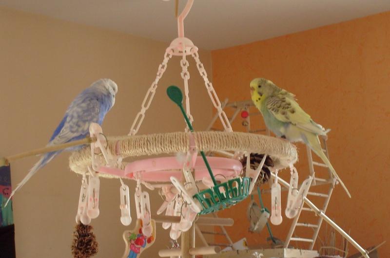 JEUX et LIEUX FAVORIS de nos oiseaux - Page 3 S7302112