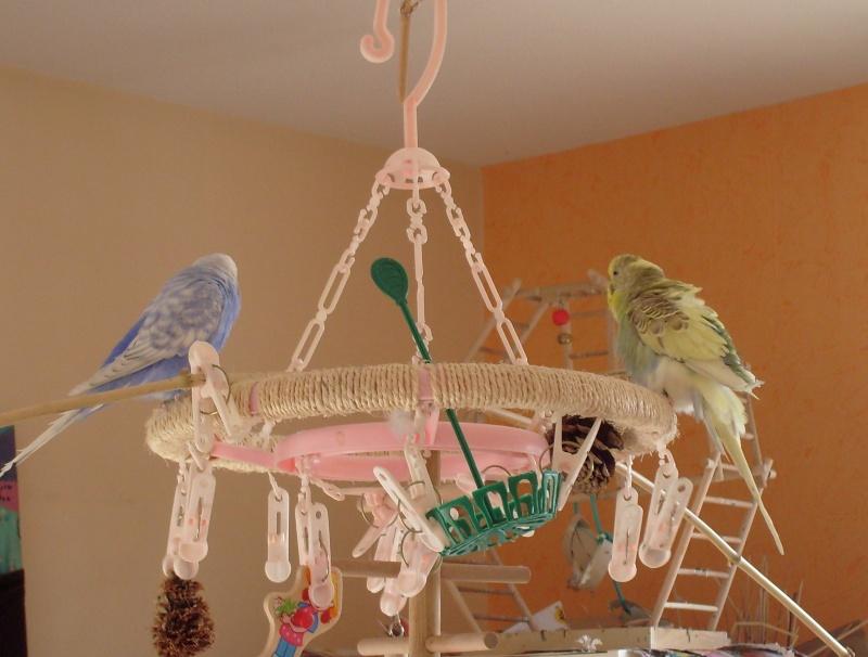 JEUX et LIEUX FAVORIS de nos oiseaux - Page 3 S7302113