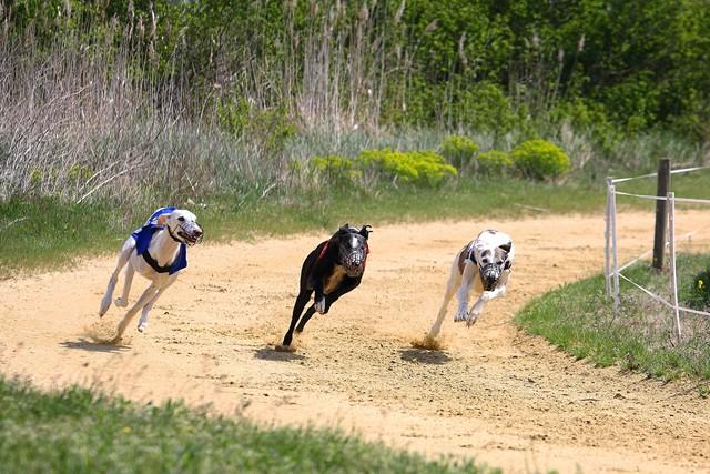 Les galgos à l'ENC de Monteux (84) - 14/04/2012 Img_0114