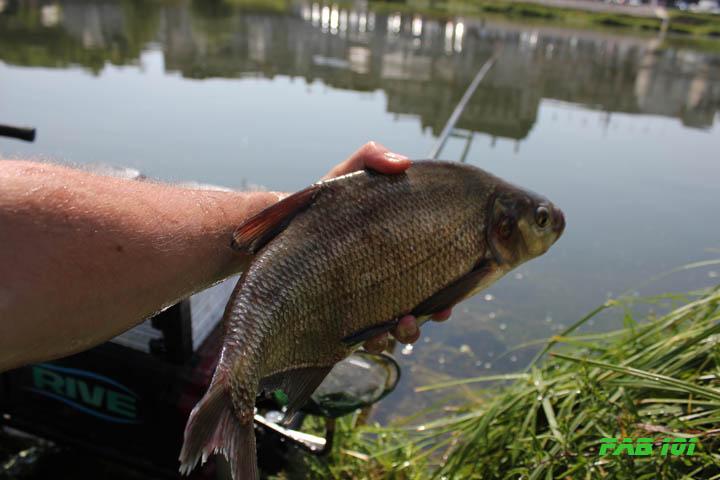 Matinée pêche au coup en Loire 1310